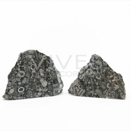Jaspe Fósil, minerales en bruto con una cara pulida.