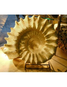 Ammonite Gigante Madagascar