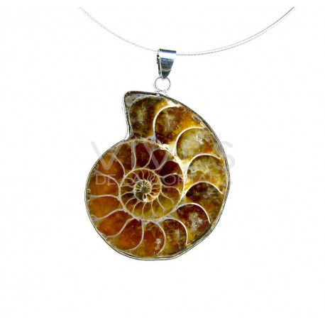Colgante Ammonite